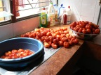 Holy Tomatoes!